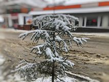 Little spruce in the snow on a city street. Winter noon. Snowy street. Mountain ski resort Bakuriani. Little spruce in the snow on a city street. Winter noon stock photo