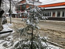 Little spruce in the snow on a city street. Winter noon. Snowy street. Mountain ski resort Bakuriani. Little spruce in the snow on a city street. Winter noon stock photography