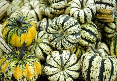 Little Squash. Pile on green and white squash at an outdoor market stock image