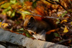 Little Squirrel Stock Photography