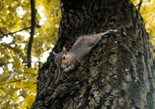 Little squirrel playing in the park stock images