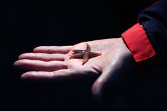 Little starfish Royalty Free Stock Image