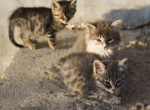 Little stray kitten outdoors Royalty Free Stock Photos