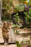 Little stray kitten Stock Images