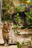 Little stray kitten. Portrait of a little homeless kitten. In the background is the second kitten Stock Images