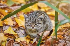 Kitten in the Grass. Little Stray Kitten Resting among Yellow Leaves in Autumn Stock Images