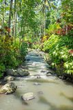 Little stream in a beautiful tropical garden on Java Indonesia. Asia Royalty Free Stock Photography