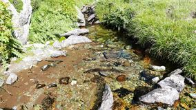Little stream flowing in idyllic uncontaminated environment crossing green meadows on the Italian Alps in summer. Little stream flowing in idyllic stock video footage