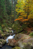Little stream through the forest in Bodenmais, Bavaria Germany, Royalty Free Stock Image