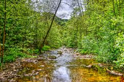 Little stream in the forest. Little stream through the forest in the hills near Malmedy in the Belgian Ardennes Royalty Free Stock Photos