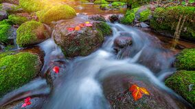 Free Little Stream In Forest Closeup Flowing Water Stock Image - 200926131