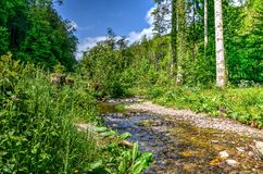 Little stream near Malmedy. Little stream in the forest in the the Belgian Ardennes near Bouillon Stock Photo