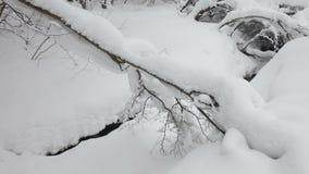 Little stream in winter forest runs through fluffy drifts. stock footage