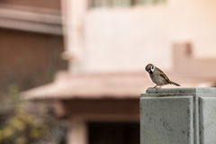 Little Street Bird Stock Photos