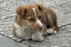 A little street dog in Velingrad, Bulgaria. Puppy Portrait. stock images