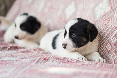 Little Street Homeless Cute Fluffy Dogs Puppies White black Royalty Free Stock Photography