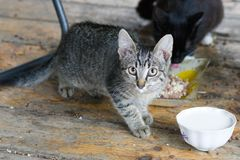 Little striped kitten looks into the camera lens stock photography