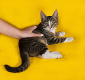 Little striped kitten lying next to human hand on yellow Royalty Free Stock Photography
