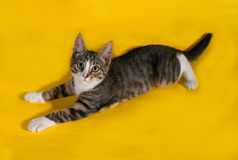 Little striped kitten lying on yellow Royalty Free Stock Photos