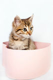 Little striped kitten sits in a box Stock Image