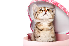 Little striped kitten sits in a box Stock Photos