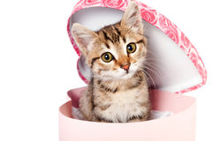 Little striped kitten sits in a box Royalty Free Stock Image
