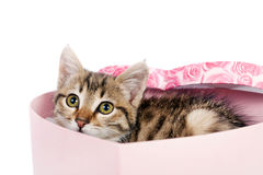 Little striped kitten sits in a box Royalty Free Stock Photo