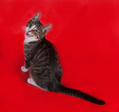 Little striped kitten sitting on red Royalty Free Stock Photography