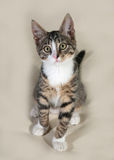 Little striped kitten standing on gray Royalty Free Stock Photo