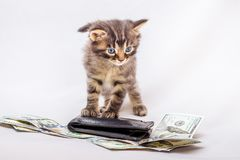 A little striped kitty near the purse and dollars. Counting money for work done. Planning financial costs_ royalty free stock photo