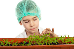 Little  student checking new plants Royalty Free Stock Images