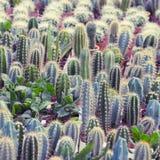 Little succulents Stock Photo