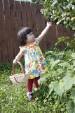 Little Summer Resident. Baby collects black currants Royalty Free Stock Photo
