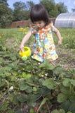 Little Summer Resident. Stock Image