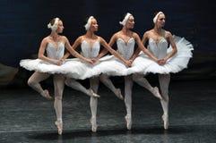 Little Swans Dance stock images