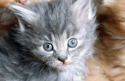 Free Little Sweet Cat. Stock Images - 91105854