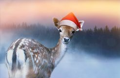 Little sweet fawn in red Santa Claus hat is looking into the camera at Christmas evening royalty free stock images