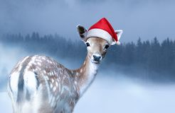 Little sweet fawn in red Santa Claus hat is looking into the camera at Christmas evening stock photography