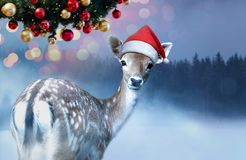 Little sweet fawn in red Santa Claus hat is looking into the camera at Christmas time stock image
