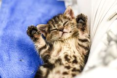 Little sweet kitten with paws up on his back at home. Little sweet kitten with paws up on his back at home Stock Photo