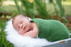 Little sweet newborn baby boy, sleeping in crate with wrap and h. At, outdoors in garden Royalty Free Stock Photos
