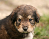 Little sweet puppy. Portrait of a little sweet puppy Stock Photo