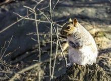 Little sweet squirrel stock photo