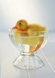 A Little Swim Stock Images