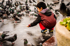 Free Little Syrian Boy Feeding Pigeons Stock Image - 65333451