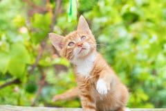 Little tabby cat Stock Photos