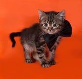 Little tabby kitten in bow tie standing on orange Royalty Free Stock Image
