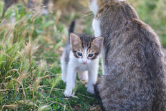 Little tabby kitten Stock Images