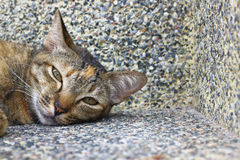 The little tabby sleeping stare. The little cat was lying in the corner of the building Royalty Free Stock Photo
