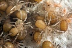 Little tarantula royalty free stock image